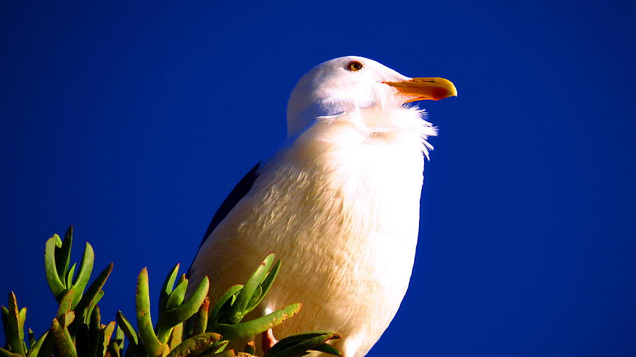 Seagull Photograph - Seagull On Top by Catherine Natalia  Roche