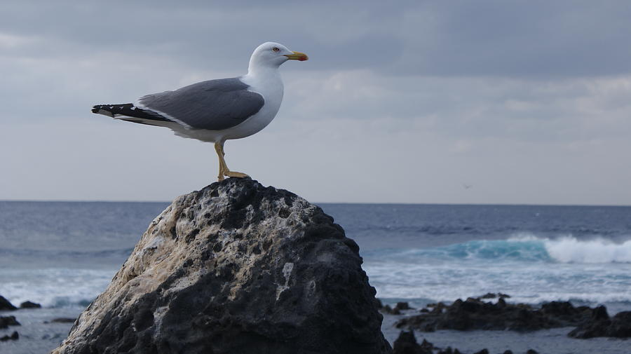 Sea Photograph - Seagull by Luis and Paula Lopez