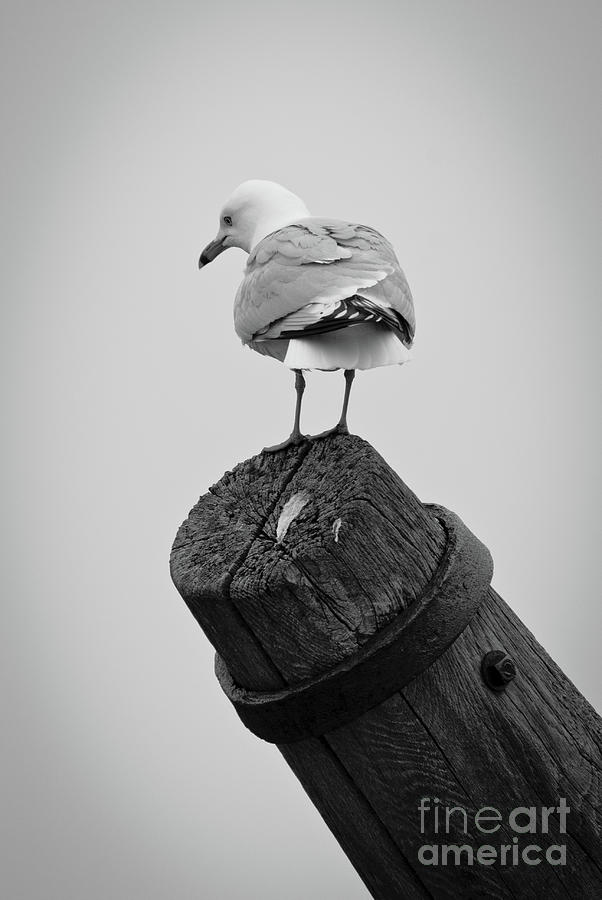 Seagull Photograph - Seagull Rest Stop by Ever-Curious Photography