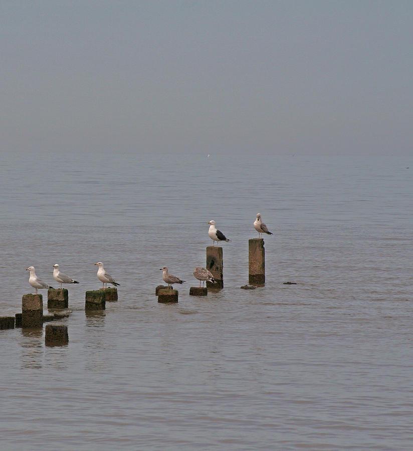 Birds Photograph - Seagulls At Rest by Camera Rustica Bill Kerr