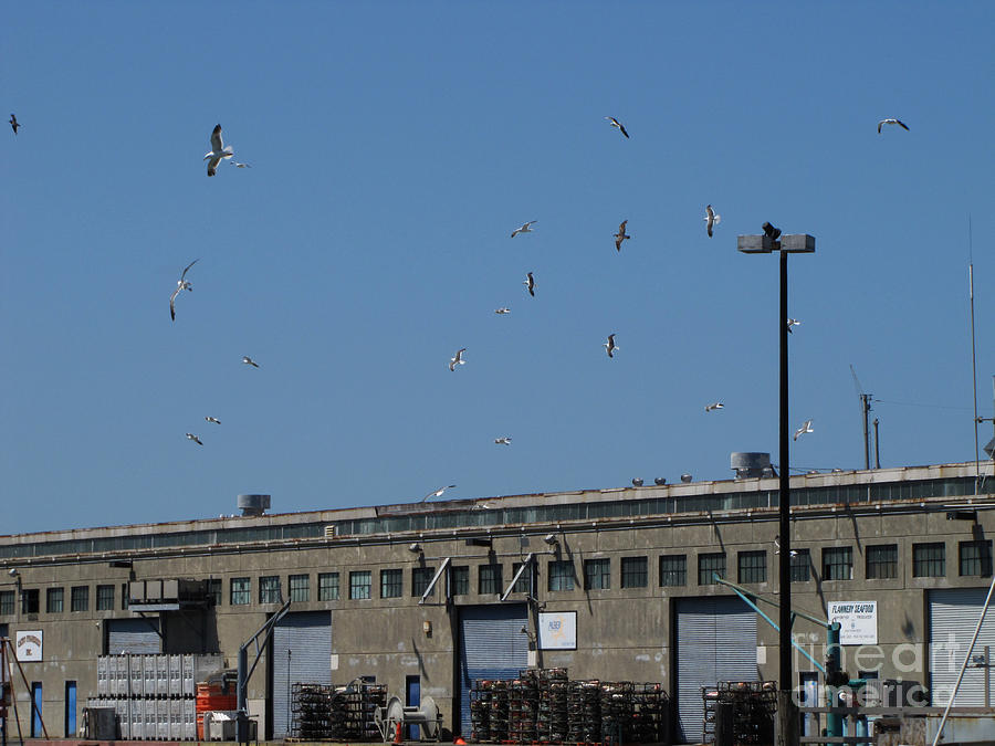 Photo Digital Art - Seagulls By The Pier by Serena Ballard