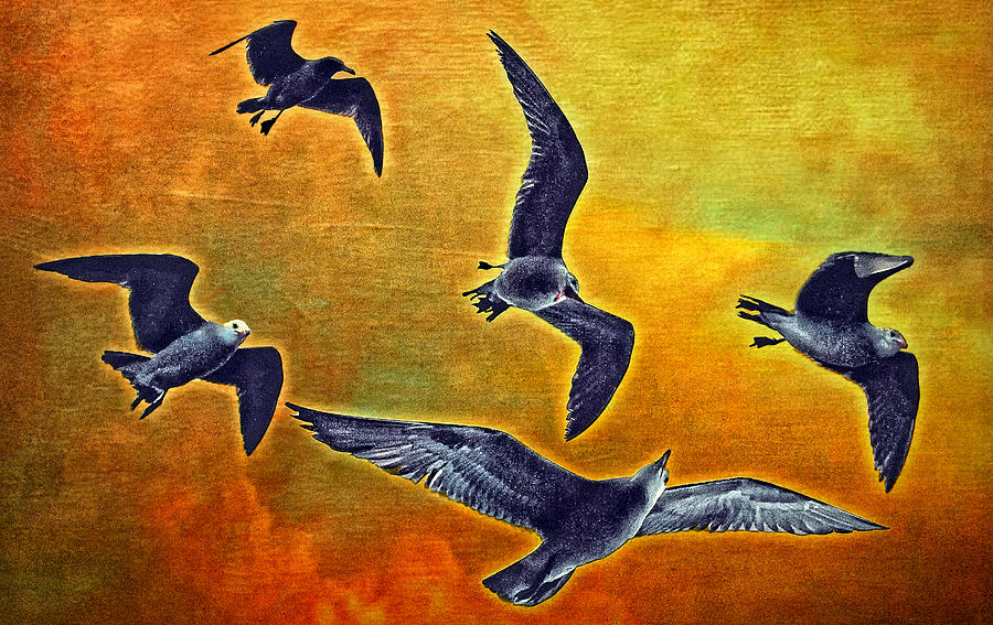 Seagulls Photograph - Seagulls In Flight by Donna Pagakis