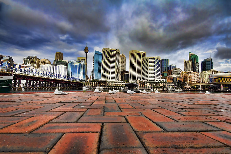 Darling Harbor Photograph - Seagulls Perspective by Douglas Barnard