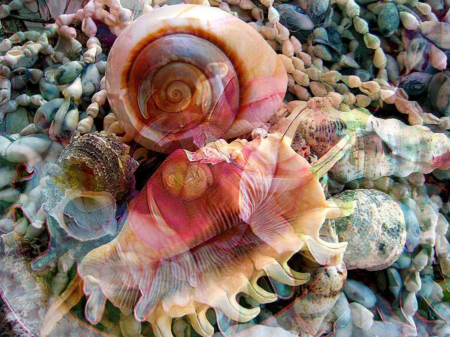 Seashells Photograph - Seashell Reflections by Shirley Sirois