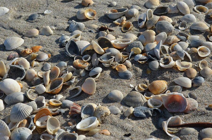 Shells Photograph - Seashells In The Sand by Brenda Thimlar