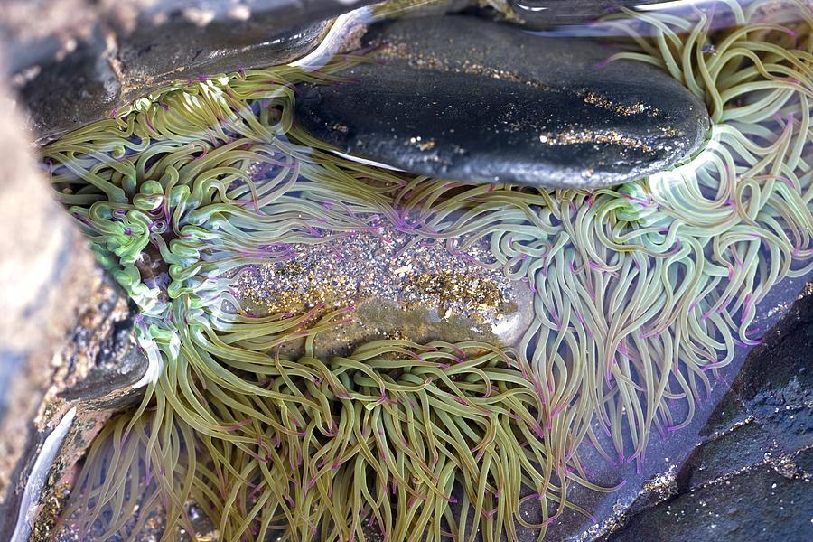 Biological Photograph - Seashore Rock Pool by Dr Keith Wheeler