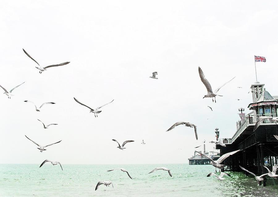 Horizontal Photograph - Seaside Seagulls by Richard Newstead