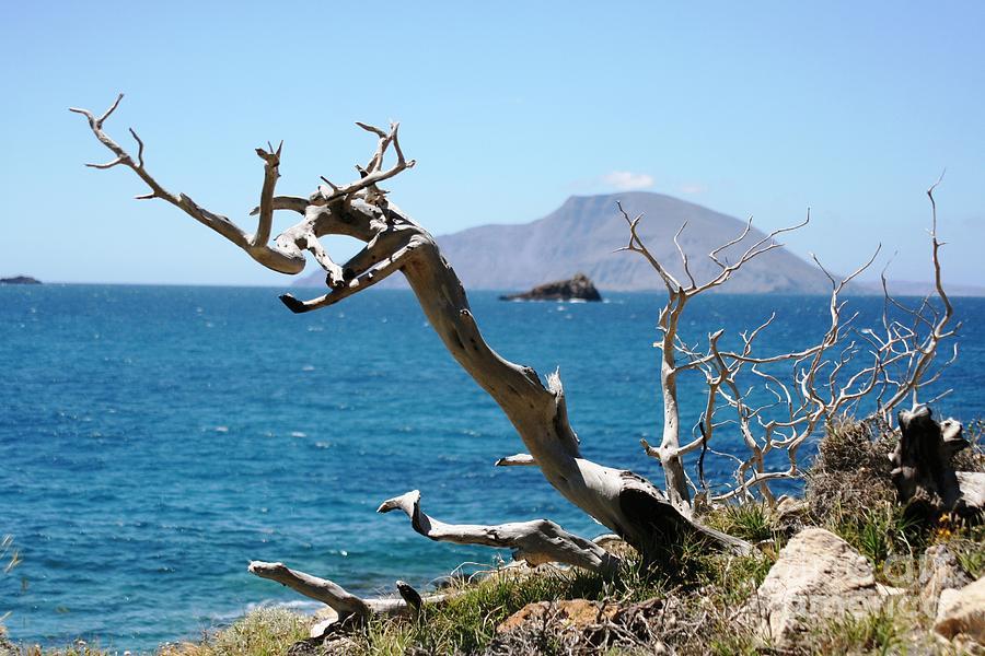 Tree Photograph - Seaside Tree by Phoenix Michael  Davis