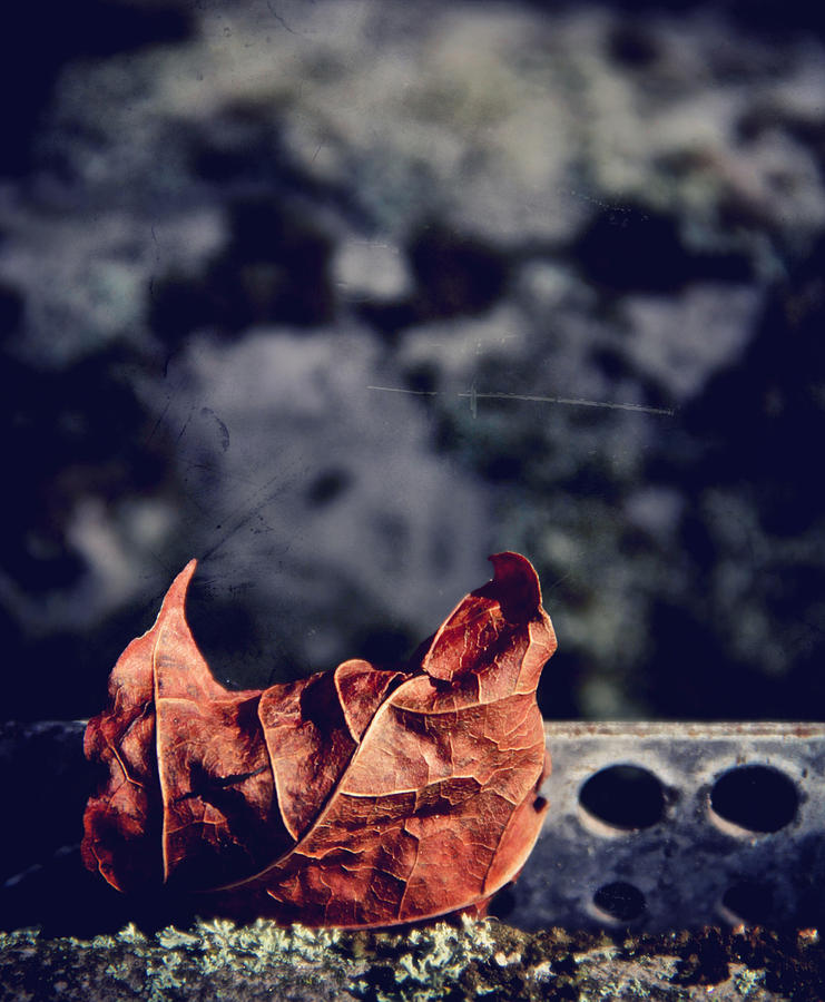 Leaf Photograph - Season Of Fire by Odd Jeppesen