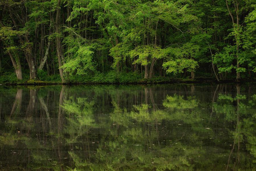 Water Reflections Photograph - Season Of Green by Karol Livote