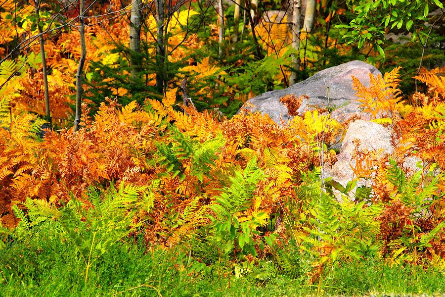 Landscape Photograph - Seasonal Change by George Ramondo