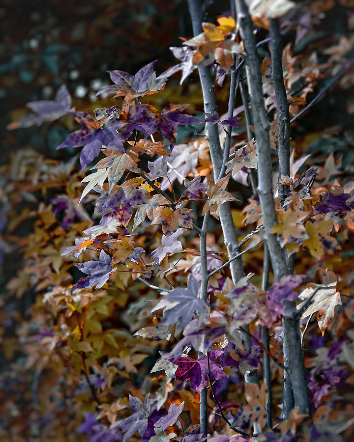 2009 Photograph - Seasonal Changes by Michael Putnam