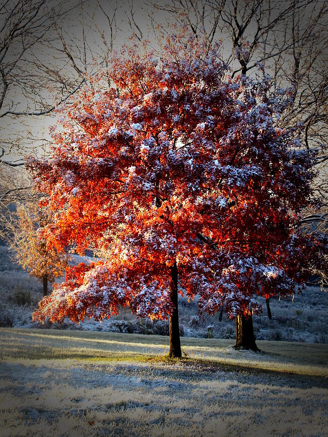 Snow Photograph - Seasons Collide by Melanie Houck