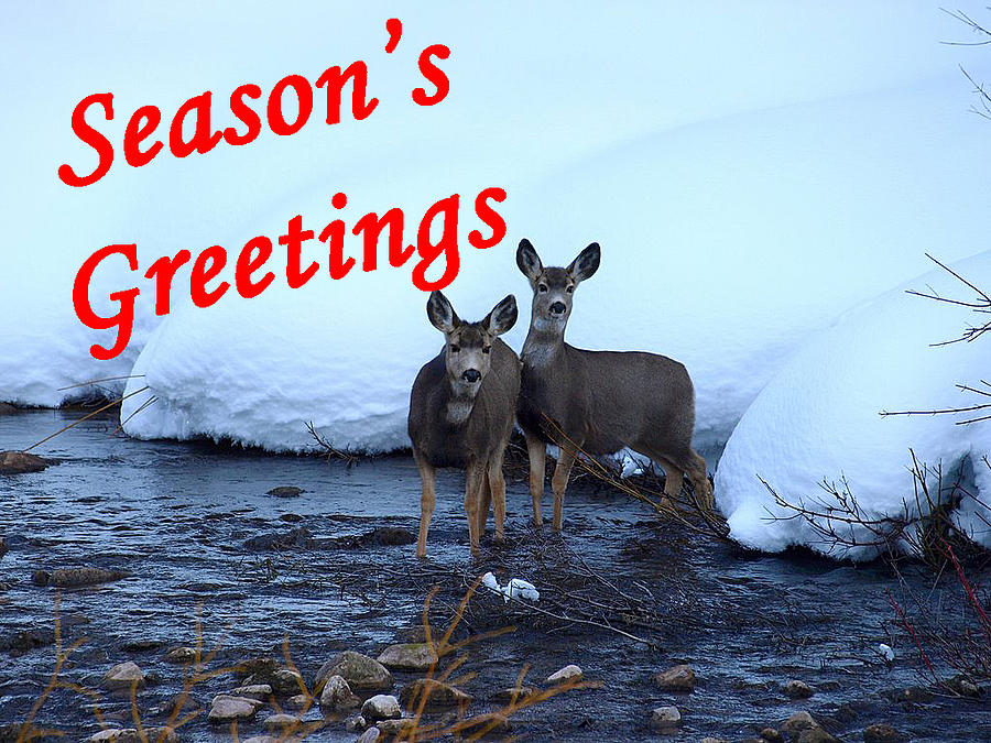 Christmas Cards Photograph - Seasons Greetings Deer by DeeLon Merritt