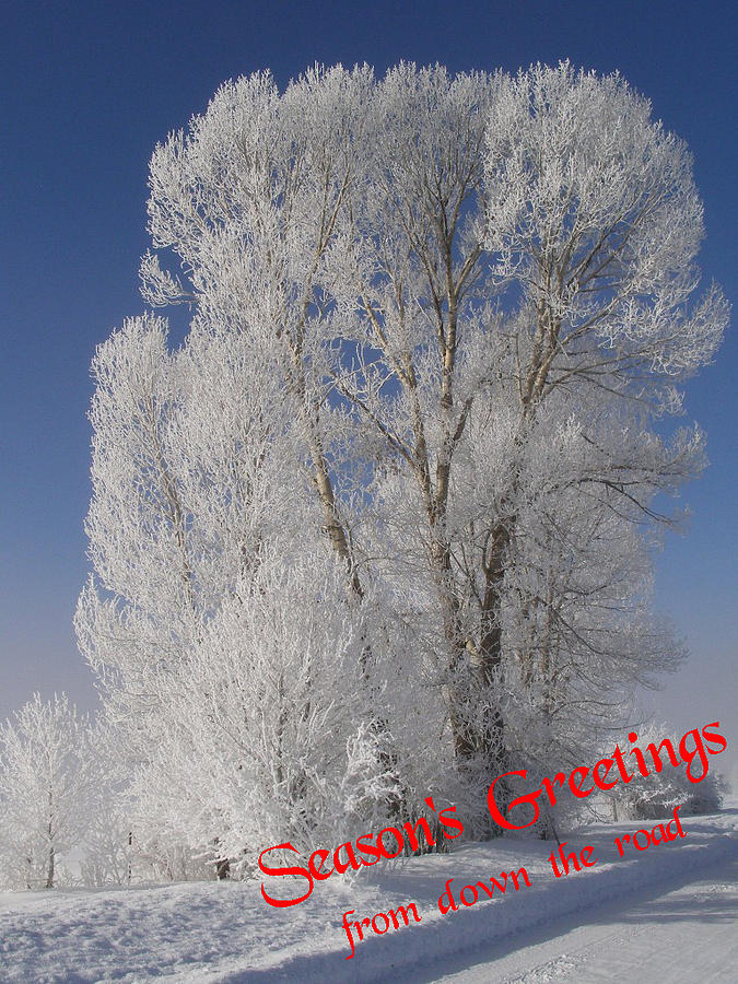 Christmas Cards Photograph - Seasons Greetings From Down The Road by DeeLon Merritt