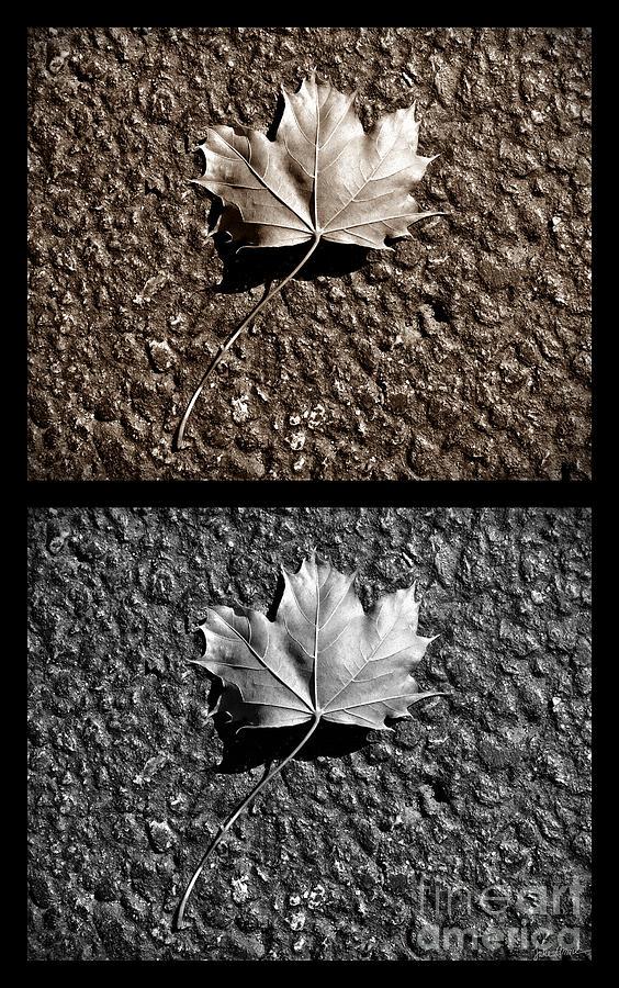 Seasons Photograph - Seasons Of Change by Luke Moore
