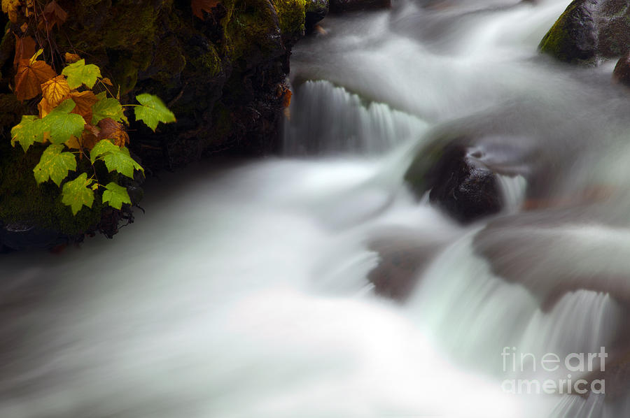 Autumn Photograph - Seasons Rush By by Mike  Dawson