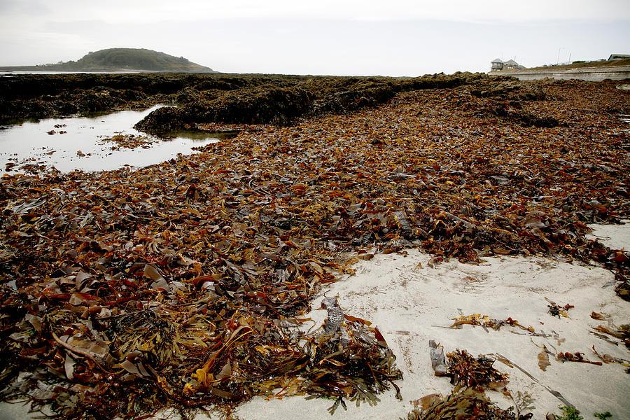 Kelp Photograph - Seaweed Covered Beach by Dr Keith Wheeler