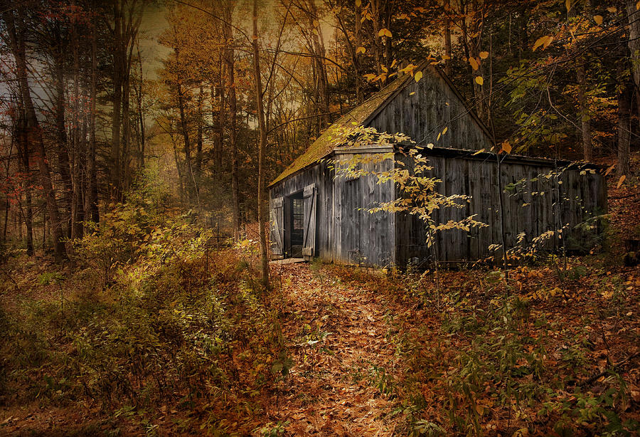 Shack Photograph - Secluded by Robin-Lee Vieira