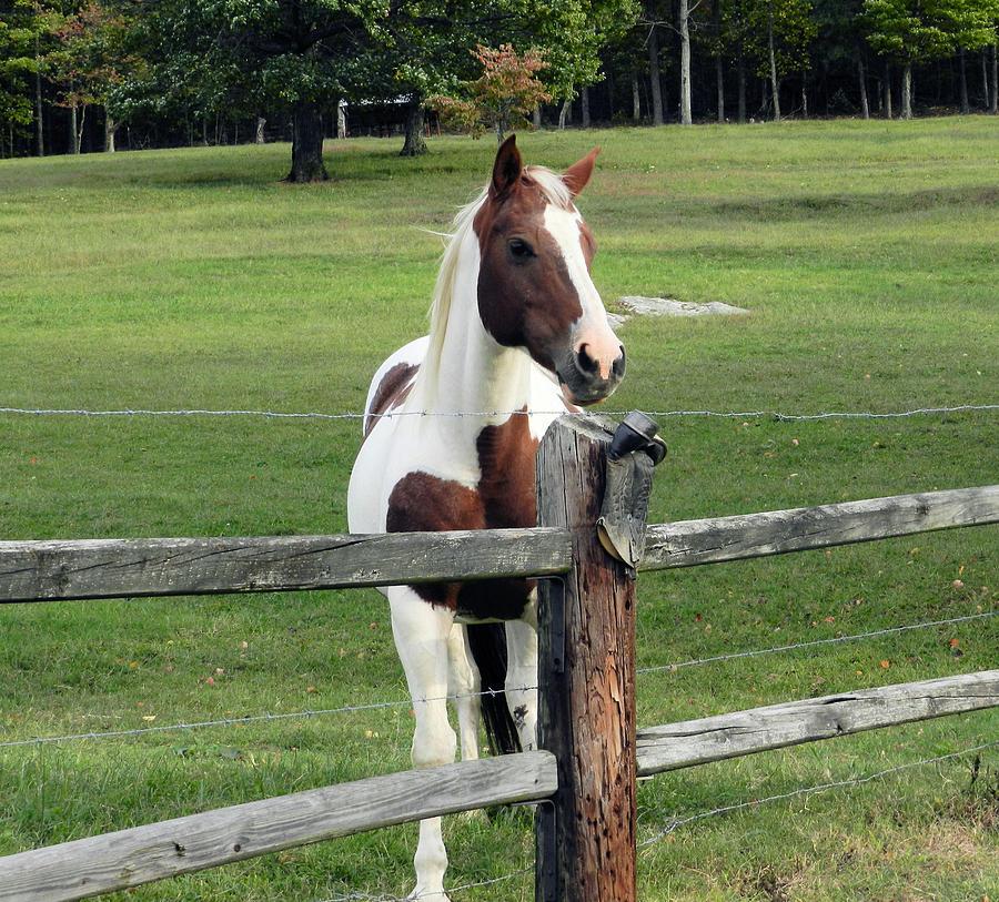 Horse Photograph - Secrets In The Field by Jennifer Stockman