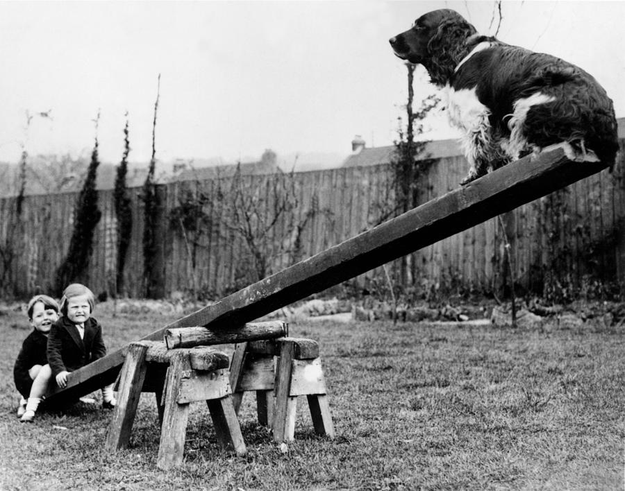 Child Photograph - See-saw Dog by Fox Photos