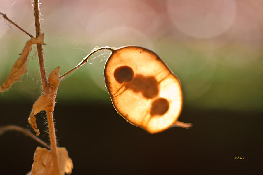 Seed Pod Photograph - Seeds And Stems by Mitch Shindelbower