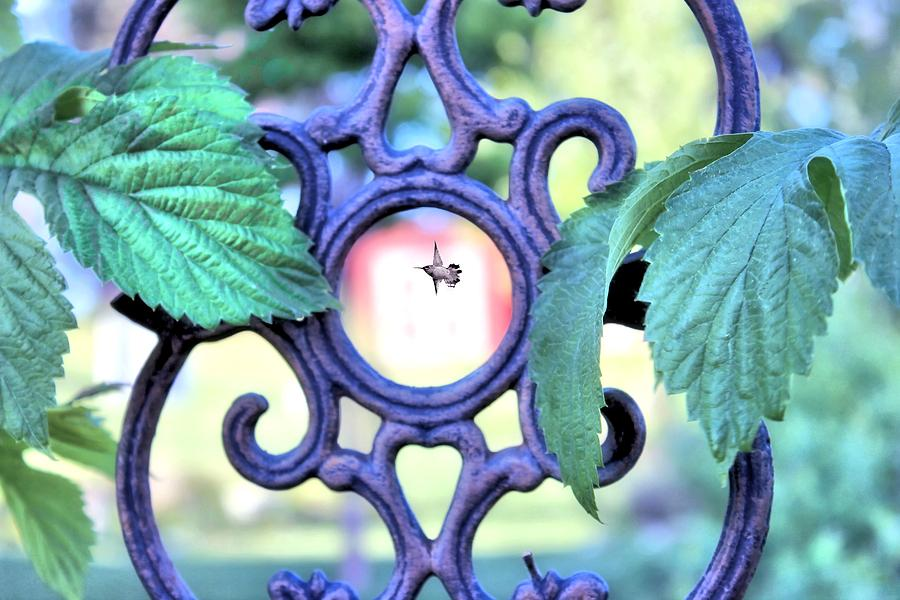 Wrought Iron Photograph - Seeing Eye To Eye by Myrna Migala