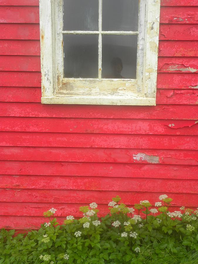 Newfoundland Photograph - Seeing Red by Peggy  McDonald