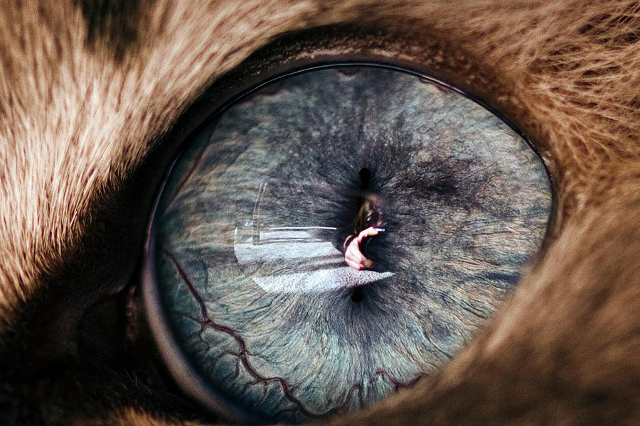 Macro Photograph - Self Portrait Through The Eyes Of Oliver by Paul Madura