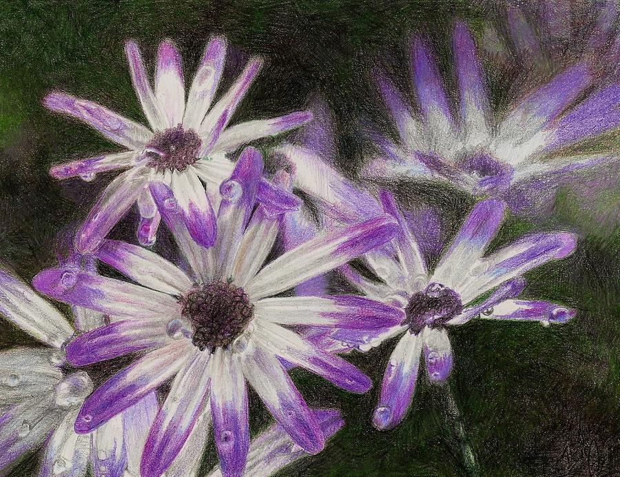 Flowers Drawing - Senetti Pericallis by Steve Asbell