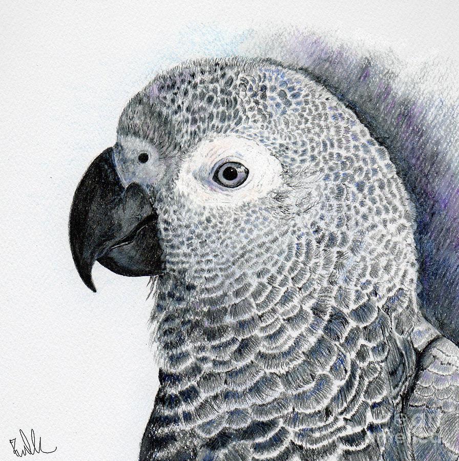 African Grey Parrot Drawing - Sensitive African Grey by Barb Kirpluk