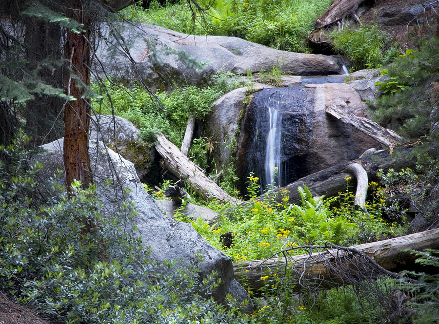 Waterfall Photograph - Sequoia Waterfall by Anthony Citro