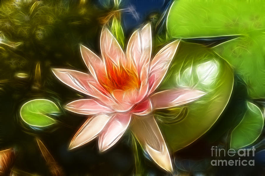 Lily Photograph - Serene Pink Waterlily  by Darleen Stry