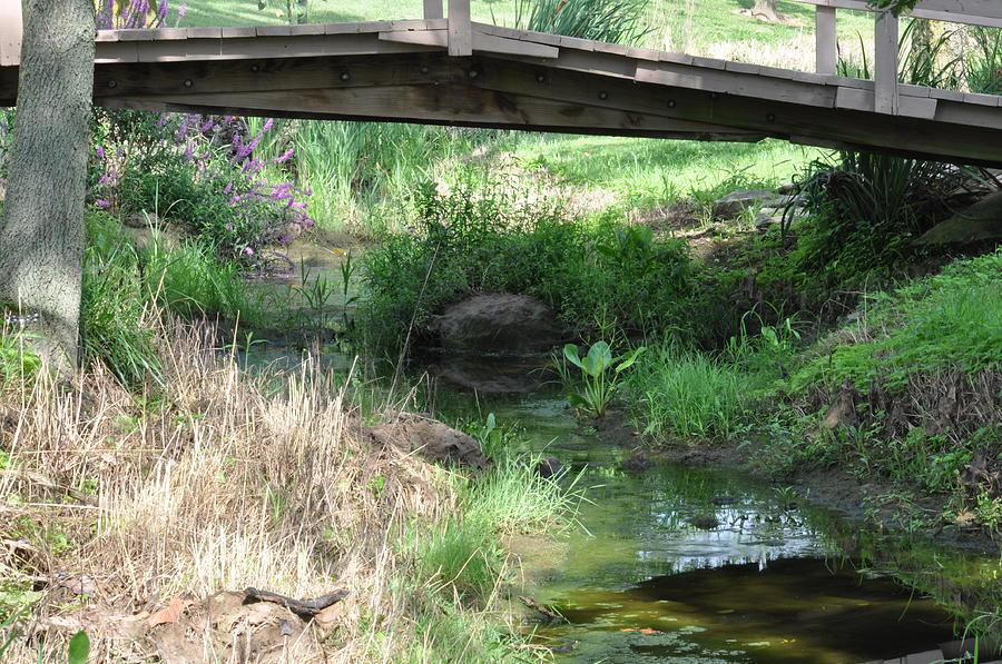 Bridge Photograph - Serenity by Misty Haglund