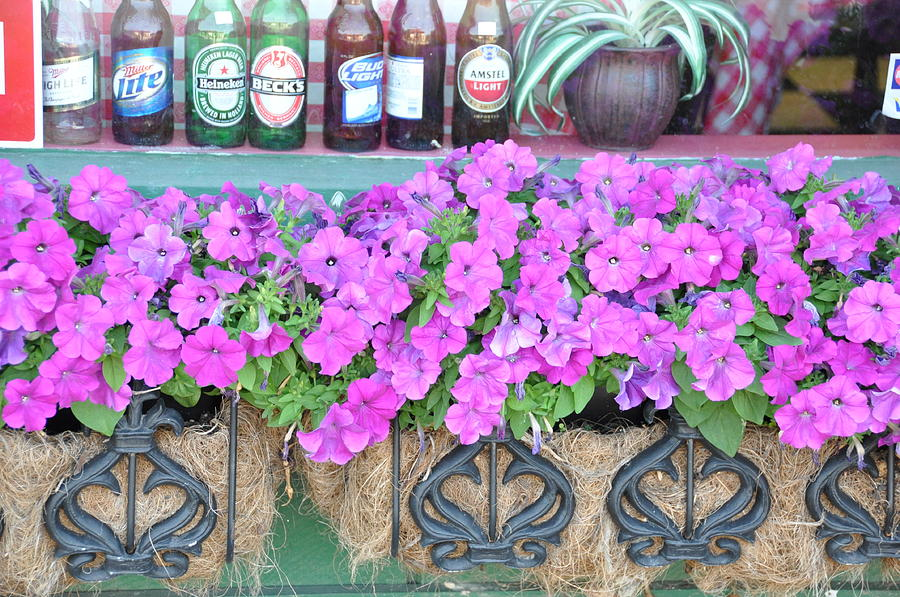 Floral Photograph - Seven Bottles Of Beer On The Wall by Jan Amiss Photography