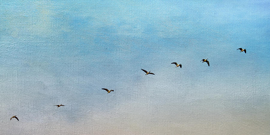Geese Photograph - Seven by Rebecca Cozart