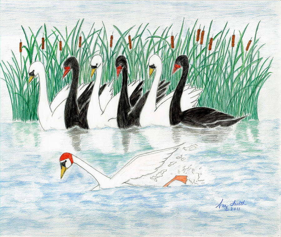 Swans Painting - Seven Swans A Swimming by Ani Todd Smith