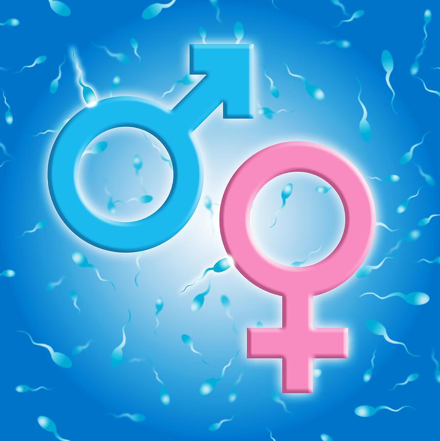 Image result for sex determination