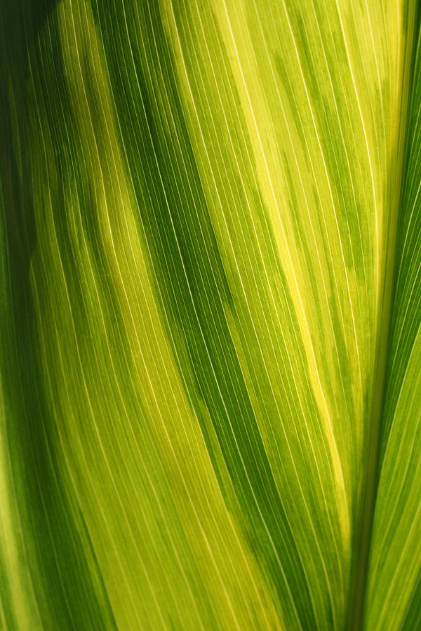 Shades Of Green Photograph by Ken Riddle