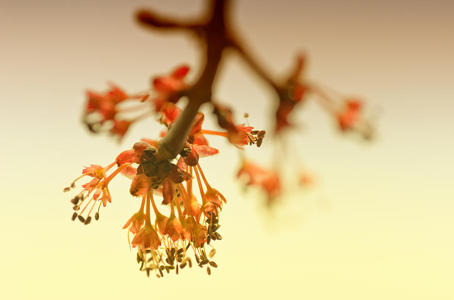 Flowering Trees Photograph - Shades Of Spring by Susan Capuano