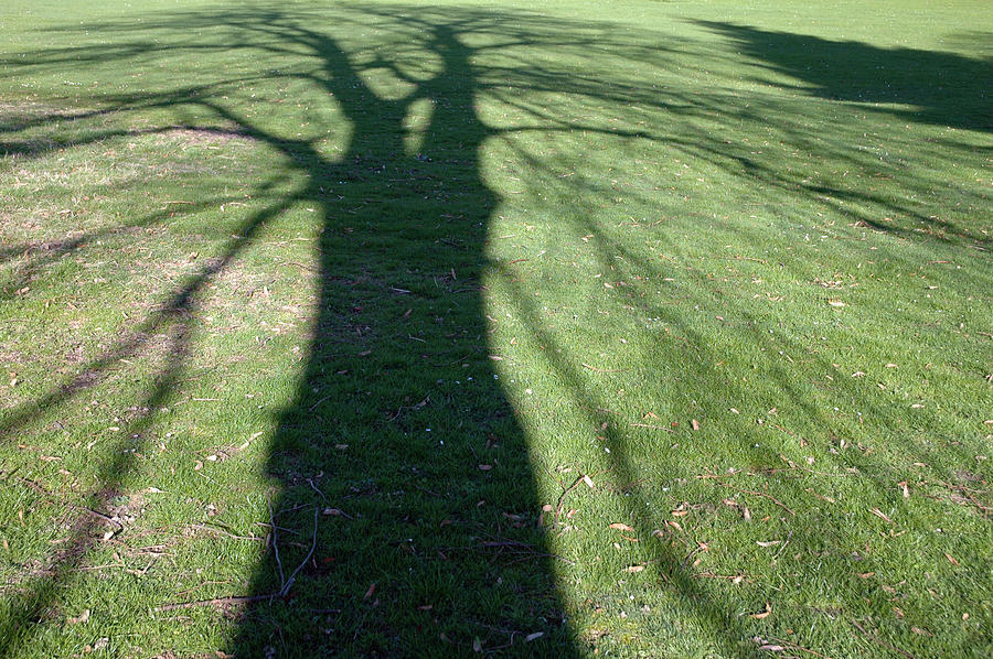 Shadow Of A Tree On Green Grass Photograph