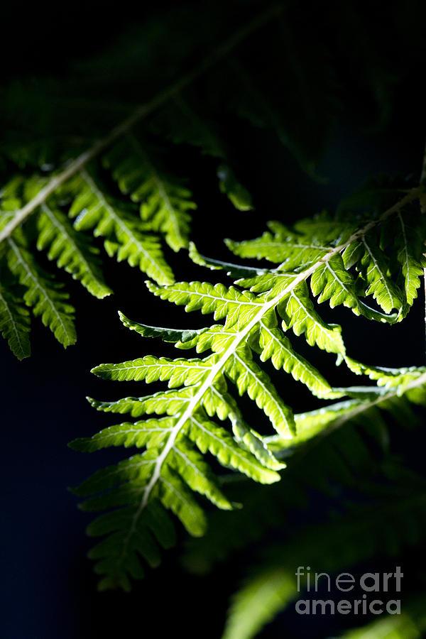 Shadow Photograph - Shadow on leaf -7 by Tad Kanazaki