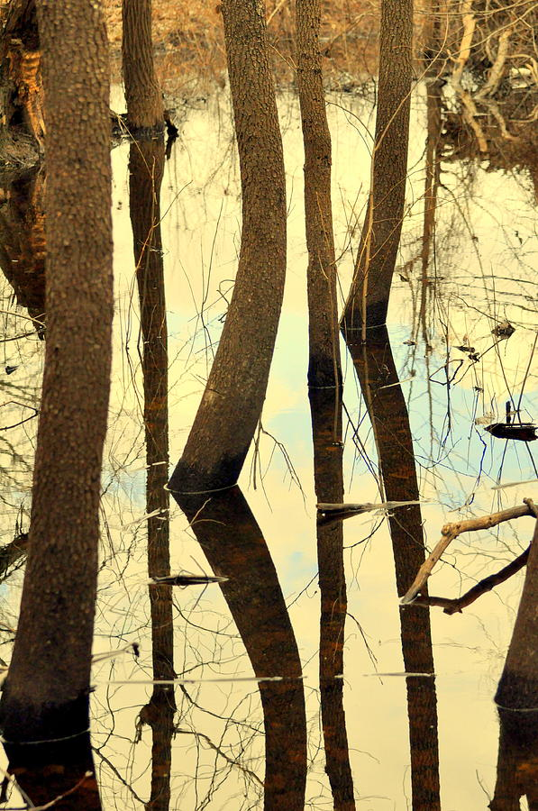 Swamp Photograph - Shadow Trees by Marty Koch