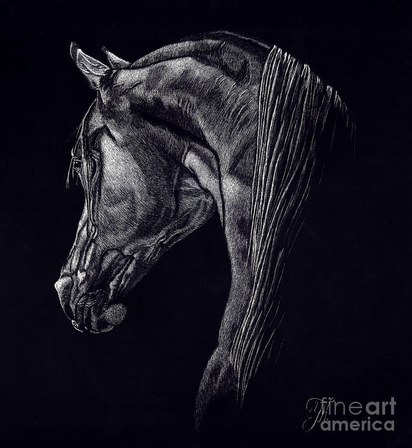 Horse Drawing - Shadow by Yenni Harrison