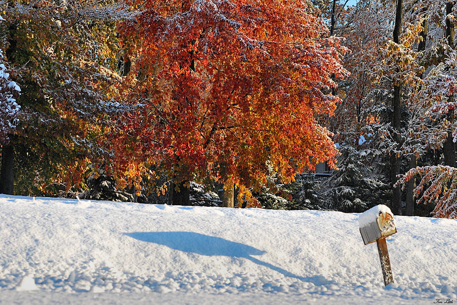 Autumn Photograph - Shadows In The Snow by Kimberly Little