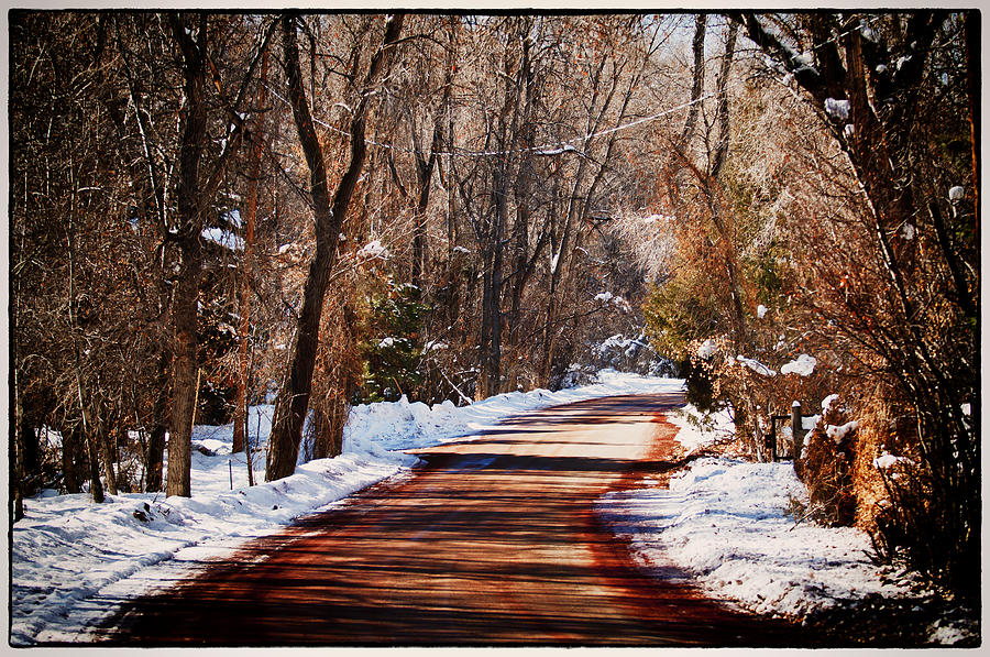 Road Photograph - Shadowy Path by Lisa  Spencer