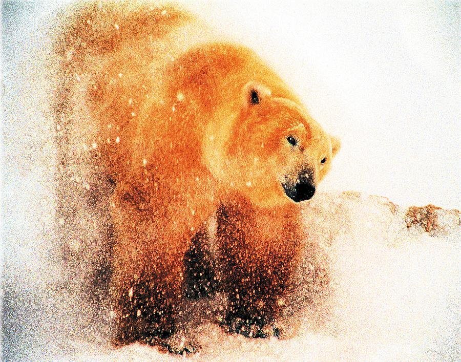 Polar Bear Digital Art - Shaking Off by Alice Ramirez