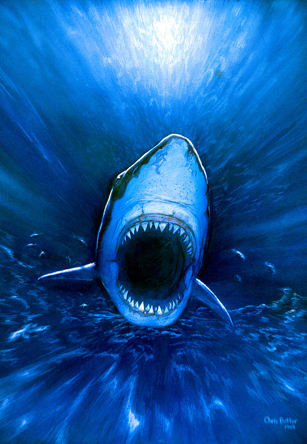 Great White Shark Photograph - Shark Attack by Chris Butler