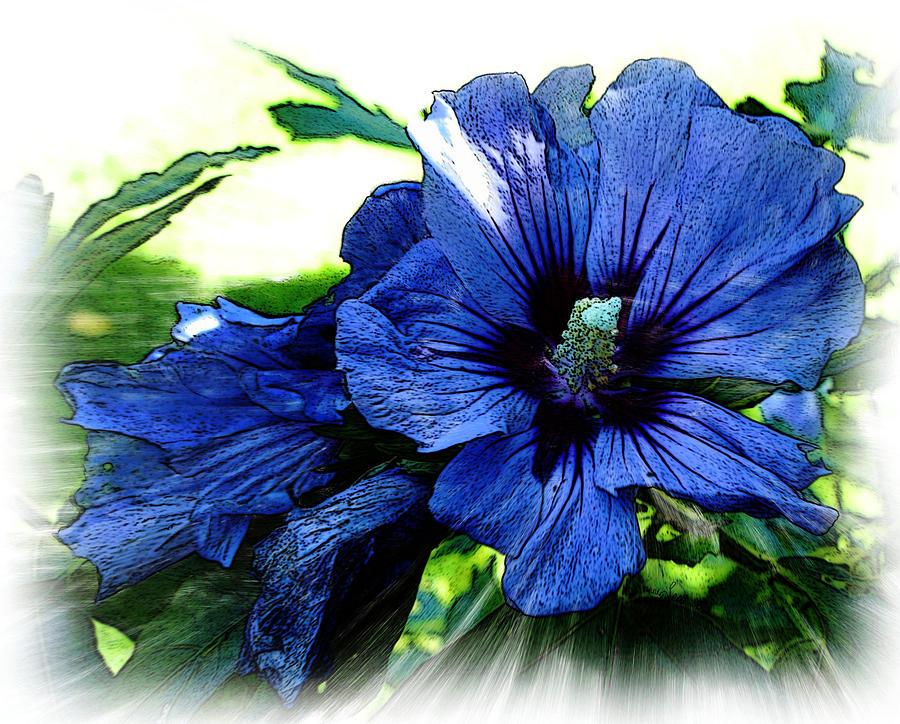 Flower.blue Photograph - Sharons Rose by Yvonne Scott