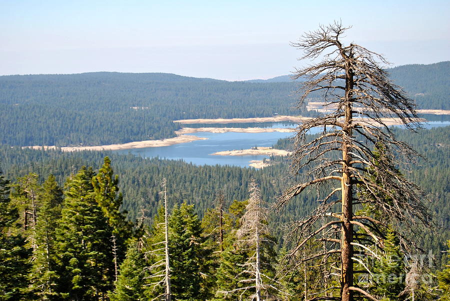 shaver lake chat Shaver lake is a vacation community less than an hour east of fresno on the western slopes of the do you want to chat about shaver lake shaver lake.